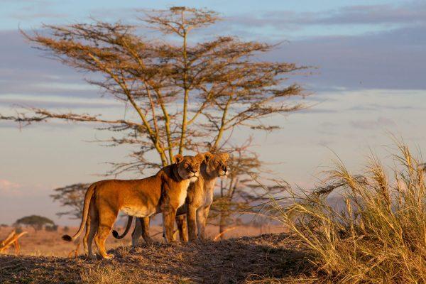 Africa, Tanzania, P.N.Serengeti