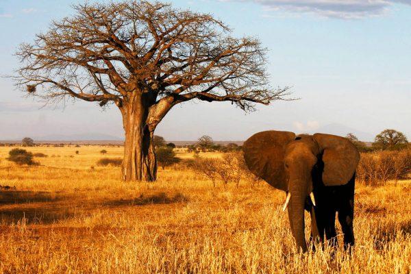 Africa, Tanzania, Tarangire