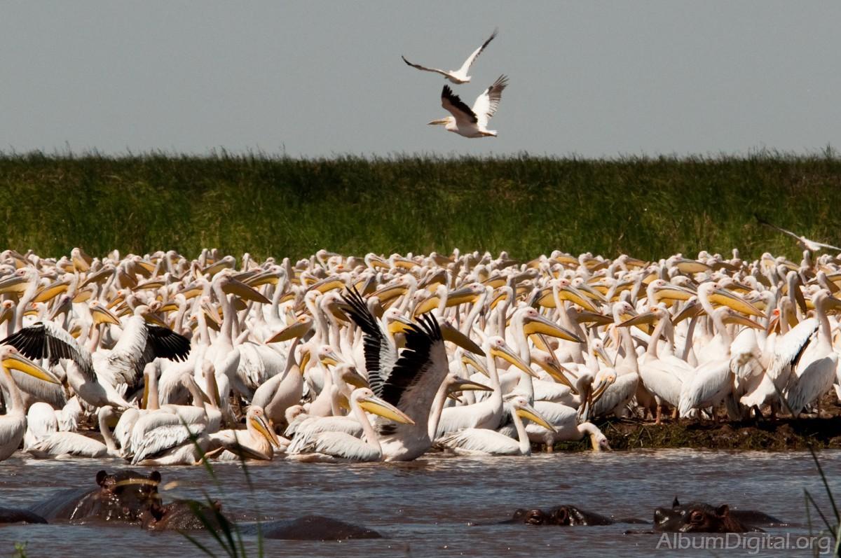 Africa, Tanzania, Lago Manyara, safari