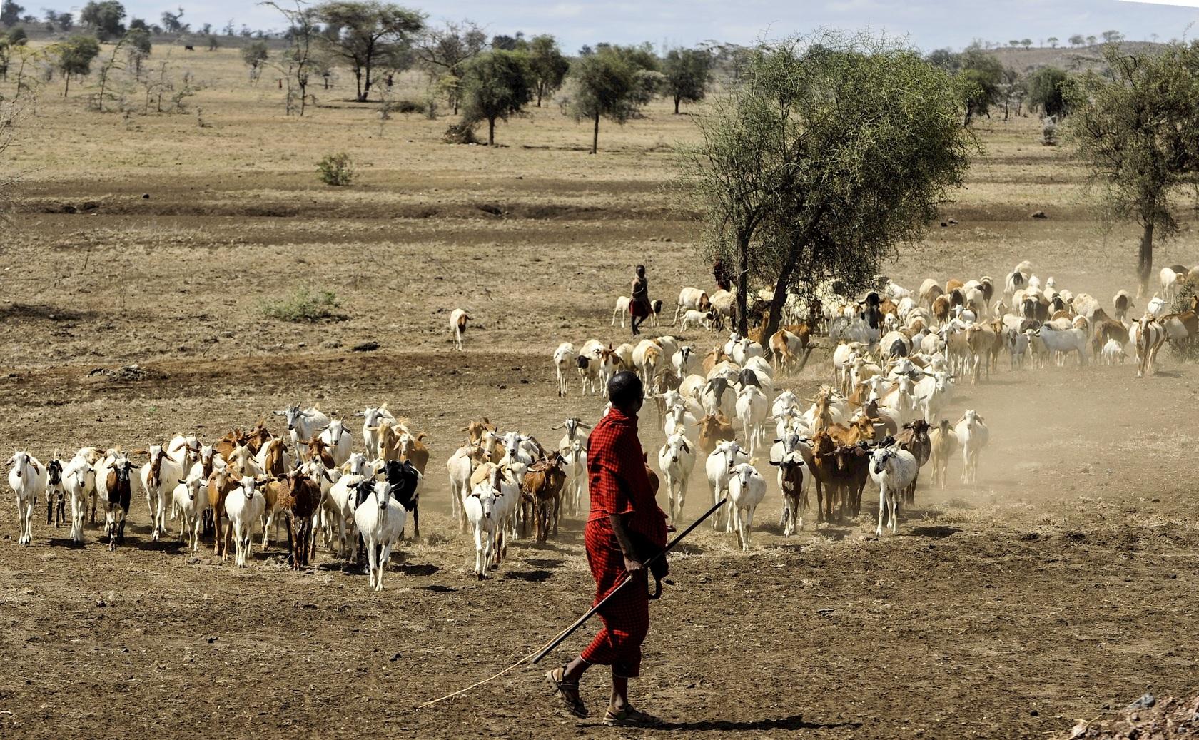 Africa, Tanzania, safari, masai