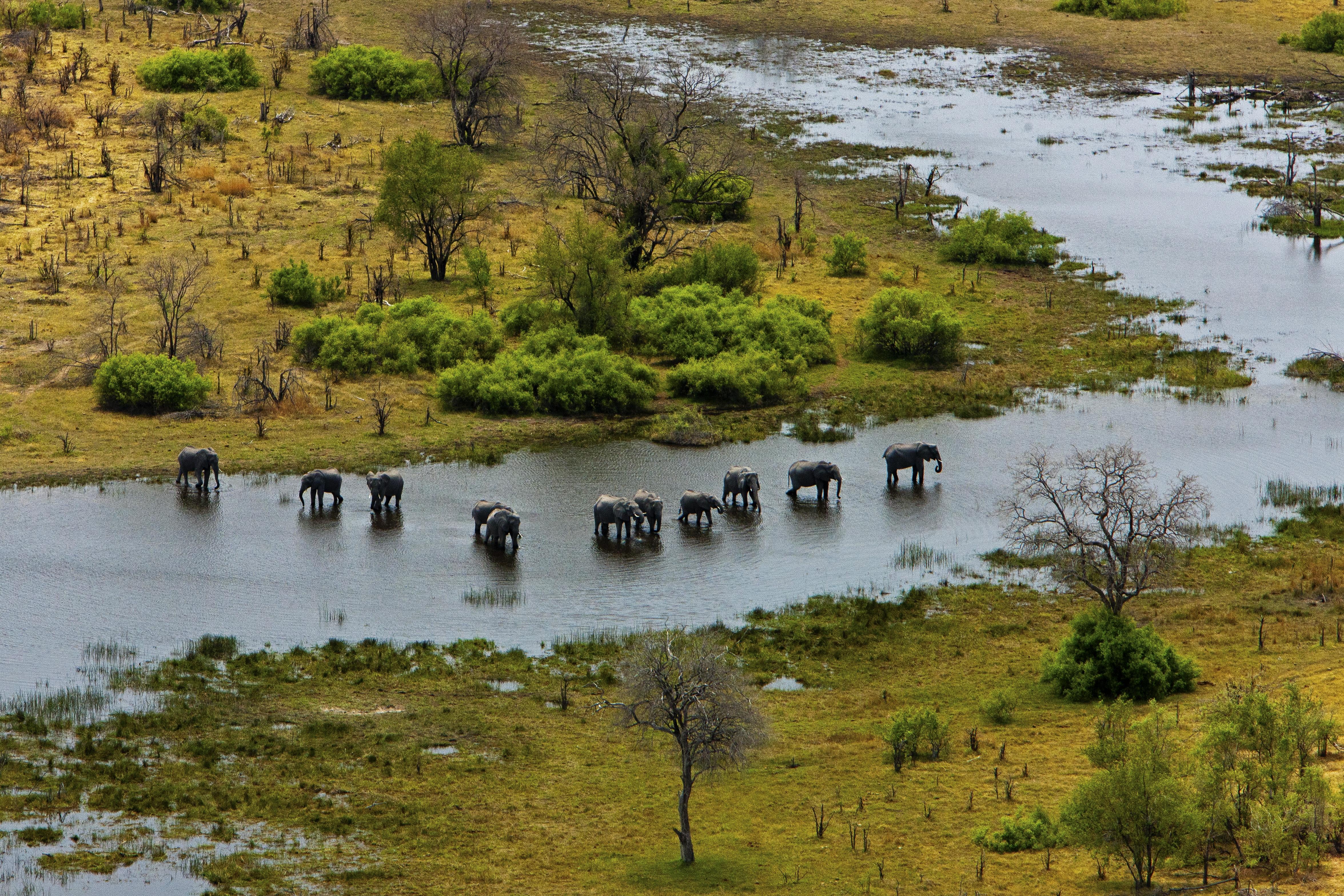 Africa,Botswana,Liyanti,Alojamiento,Selinda Explorer,animales,leopardo,árbol