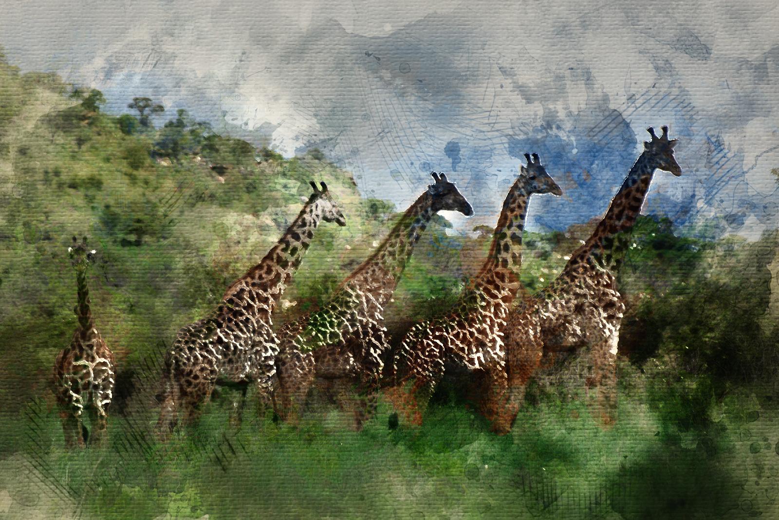 Mi primer safari. Destino Tanzania.
