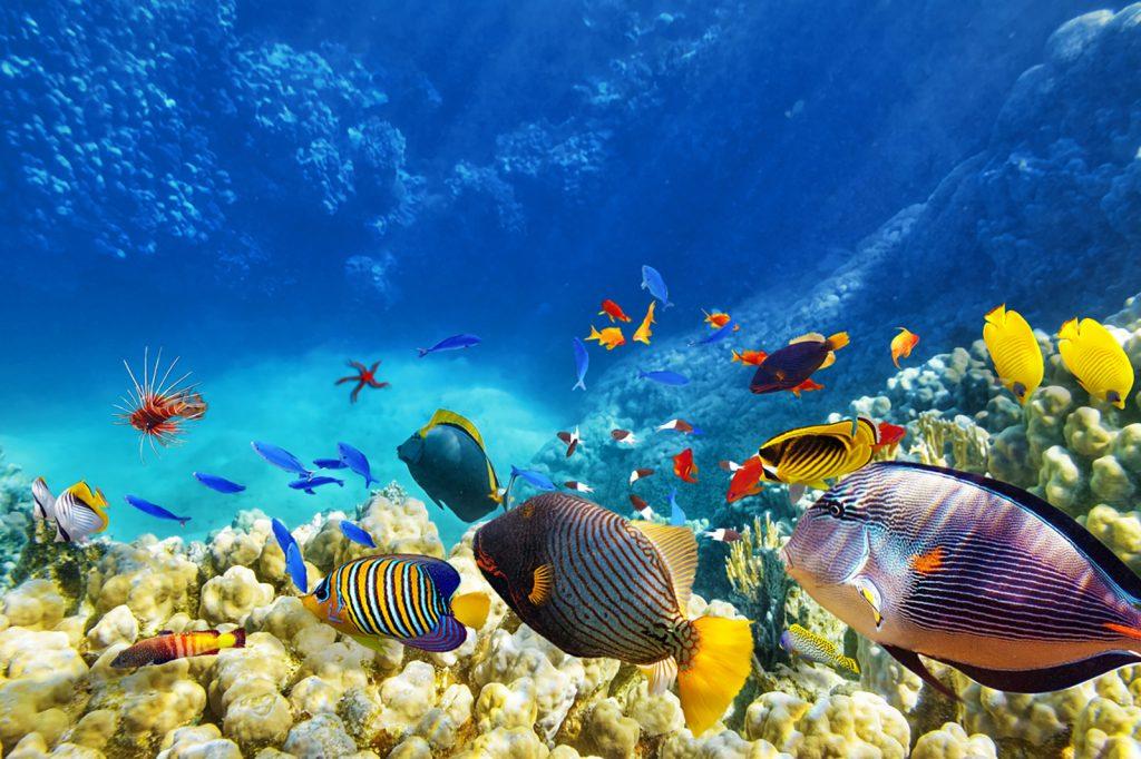 Asia, Islas Maldivas,