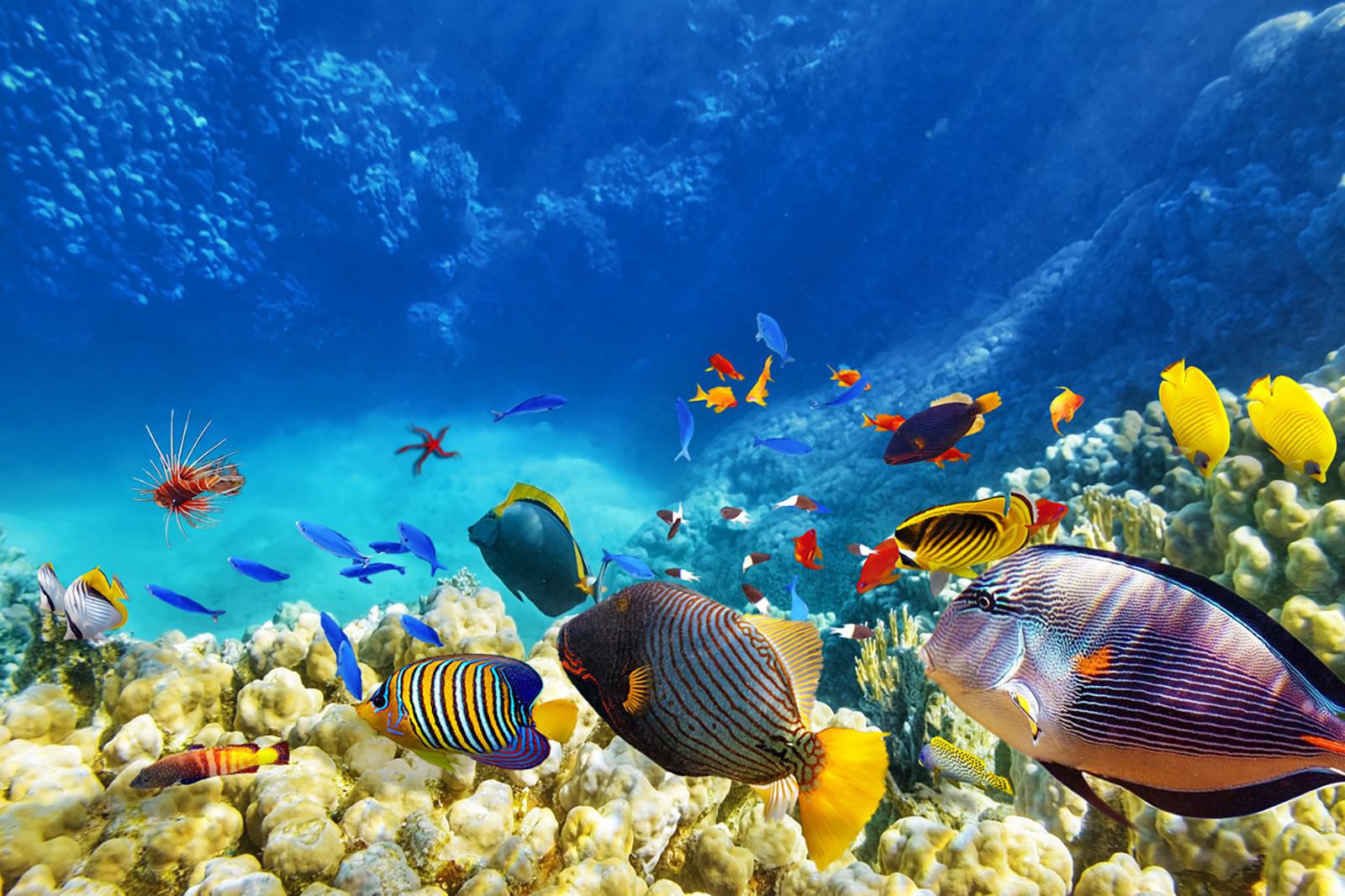 Maldivas. Playas paraíso…