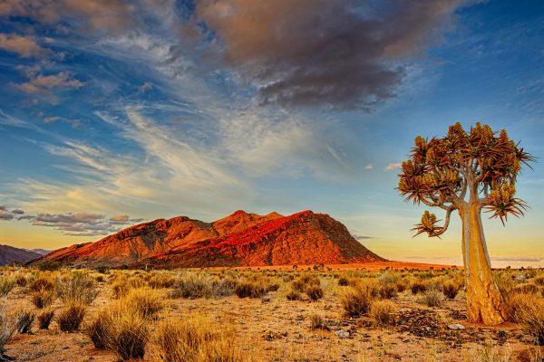 Africa,Namibia,Desierto Kalahari