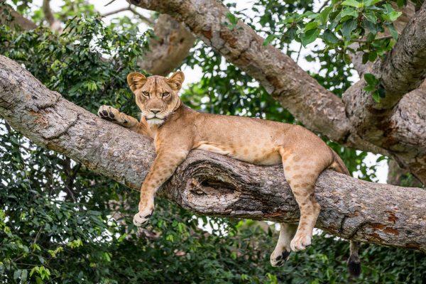 África,Uganda